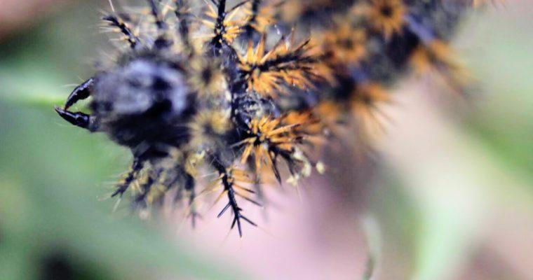 Spiky worm