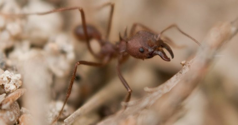 Ant striking a pose